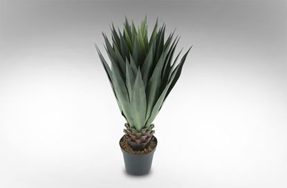 Picture of Giant Agave 120cm