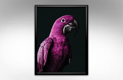 Picture of Deco Macaw