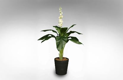 Picture of Orchid 100cm White