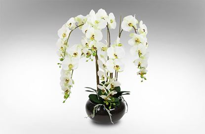 Picture of Glass Orchid Large