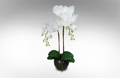Picture of Glass Orchid Small