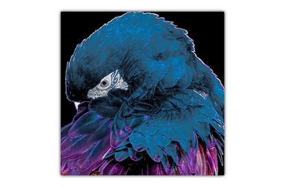 Picture of Neon Bird Blue