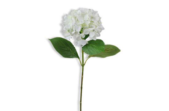 Picture of Hydrangea White