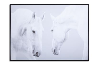 Picture of White Stallions