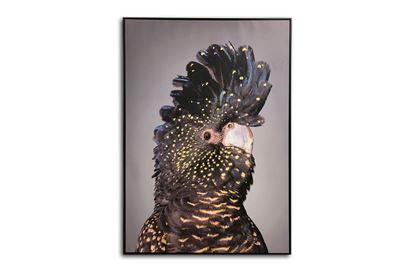 Picture of Black Cockatoo