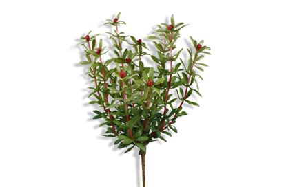 Picture of Flowering Red Bush