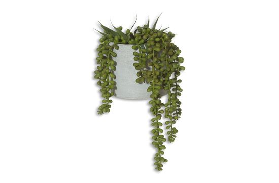 Picture of String of Pearls