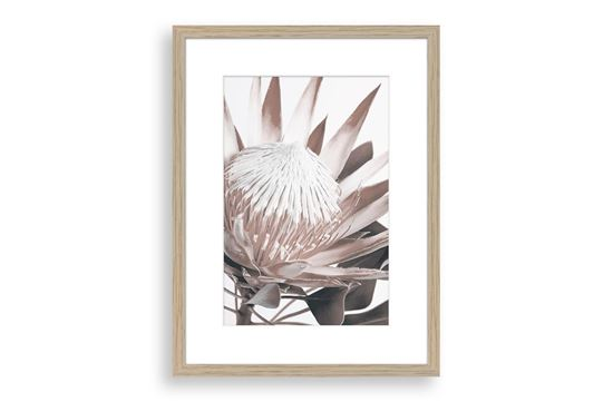Picture of Protea Cluster C