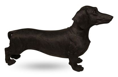 Picture of Sammy the Sausage Dog