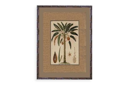 Picture of Palm One Framed Print