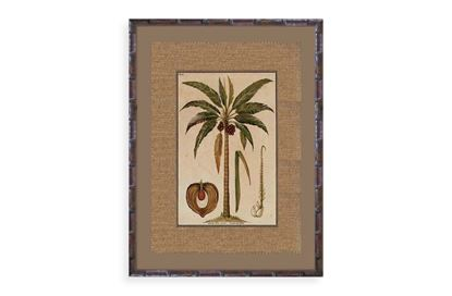 Picture of Palm Two Framed Print