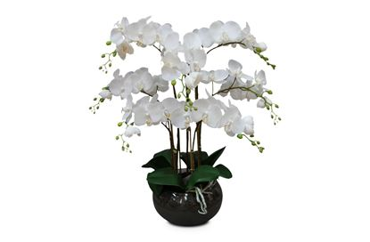 Picture of Glass Orchid 65cm