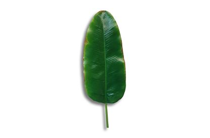 Picture of Banana Leaf 96cm