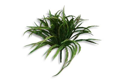 Picture of Vanilla Grass