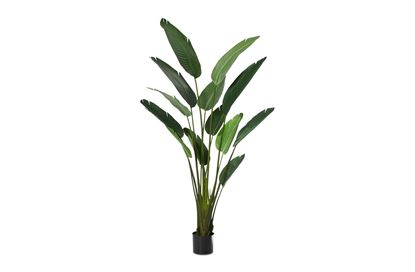Picture of BOP Plant Giant