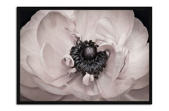 Picture of Crystal Bloom 95 x 130 B/F