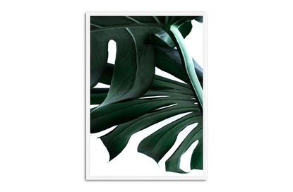 Picture of Green Palm One 75 x 55 W/F