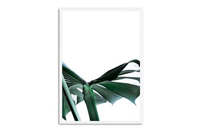 Picture of Green Palm Two 130 x 95 W/F