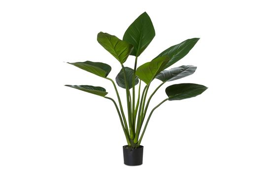 Picture of Kingdom Plant 90cm