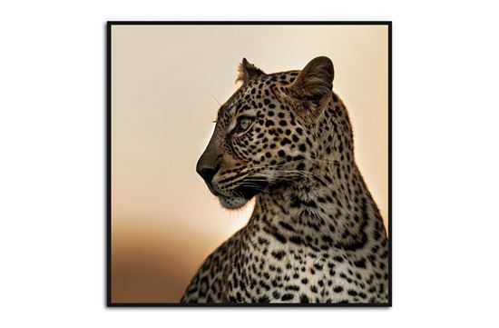 Picture of Leopard 80 x 80 B/F