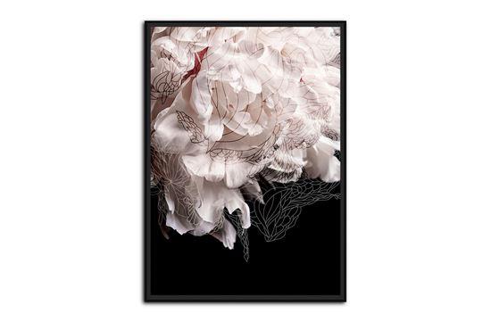 Picture of Mystic Bloom 120 x 85 B/F