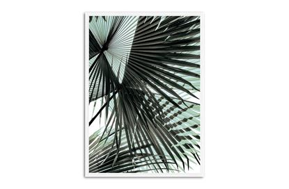 Picture of Tropic Palm 75 x 55 W/F