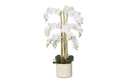 Picture of Tropical Orchid 105cm