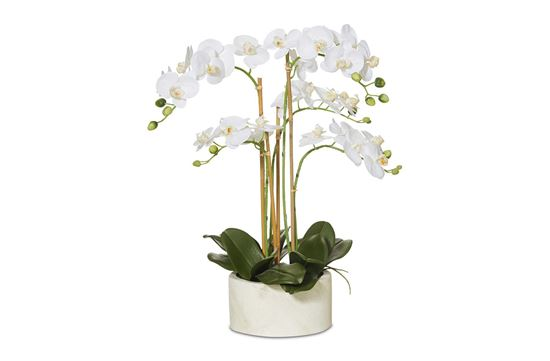 Picture of Tropical Orchid 60cm