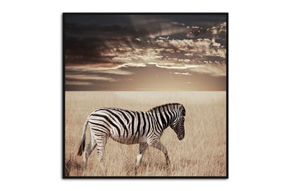 Picture of Zebra Sunset 120 x 120 B/F