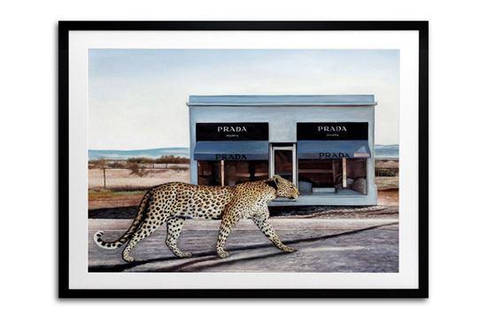 Picture of Prada Prowl 85 x 105 B/F