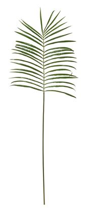Picture of Palm Frond Single