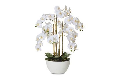 Picture of Luxe Orchid 70cm