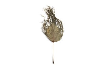 Picture of Castaway Natural Palm
