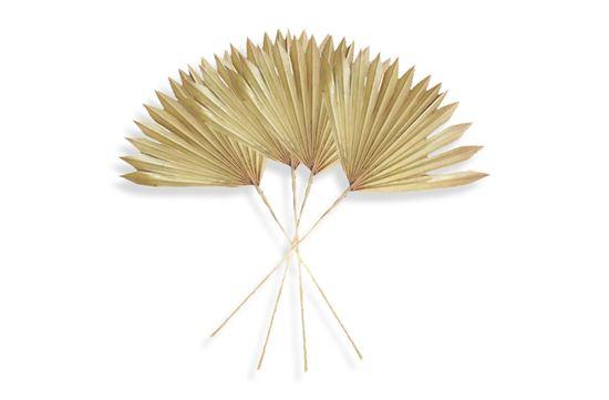 Picture of Palm Khaki Sun Mini